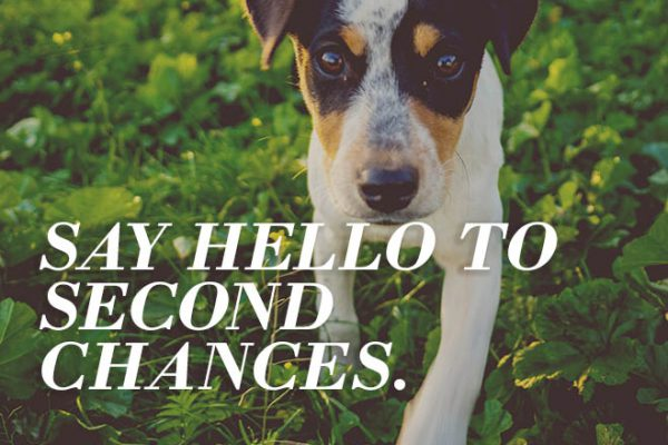 Beverly Hills Steps Up for Rescue Pets!