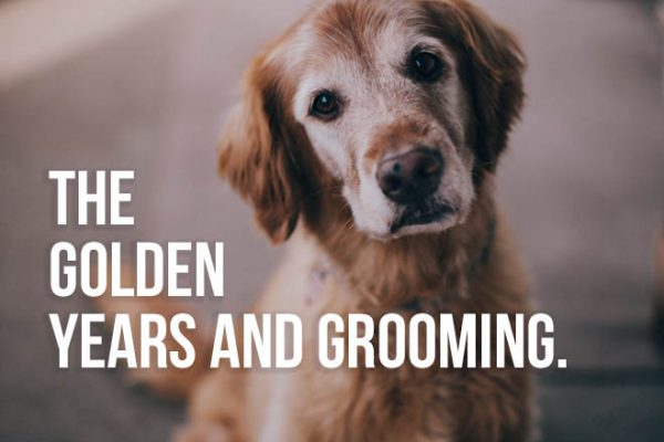 Is Your Pet Too Old to Get Groomed?