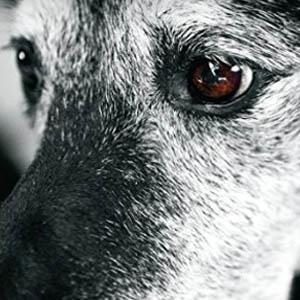 close up of elderly dog
