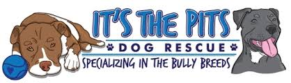 it's the pits dog rescue specializing in the bully breeds